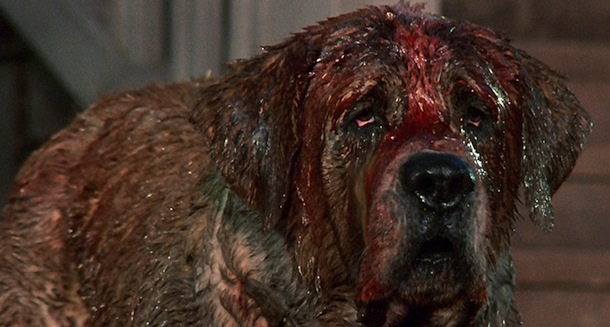 Cujo Dog Movie